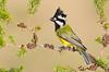 Crested Shrike-tit  - Falcunculus frontatus (m) (Benalla, Victoria)