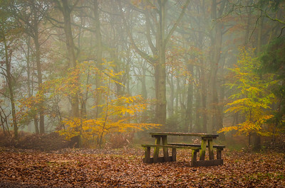 Picnic Table in the Wyre Forest