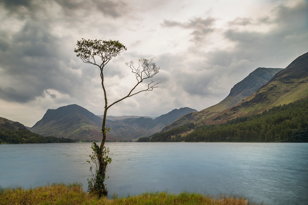 That Tree, Buttermere Cumbria
