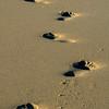 Footprints Luskentyre beach