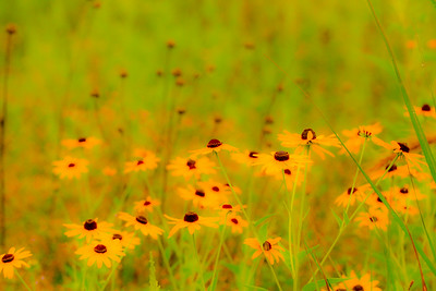 Grass Flowers Bees-33-L