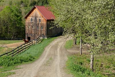 Freddie's Barn Spring - 1