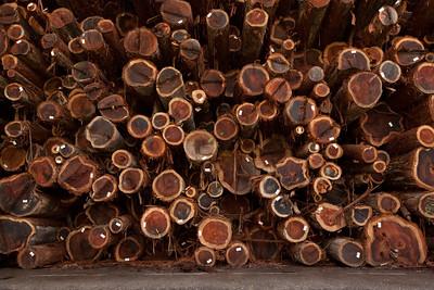 fc20100213california mendocino56438