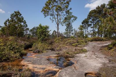 Utricularia graminifolia habitat at Phu Kradueng National Park (Thai: อุทยานแห่งชาติภูกระดึง) in Loei Province, Thailand.