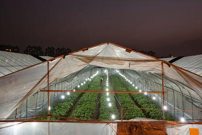 Greenhouse in Cencun, Guangzhou, China.