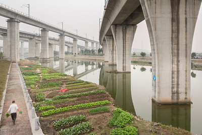 An urban farmer tends crops under elevated high speed rail lines near the Guangzhou South Railway Station in Guangzhou, Guangdong Province, China.