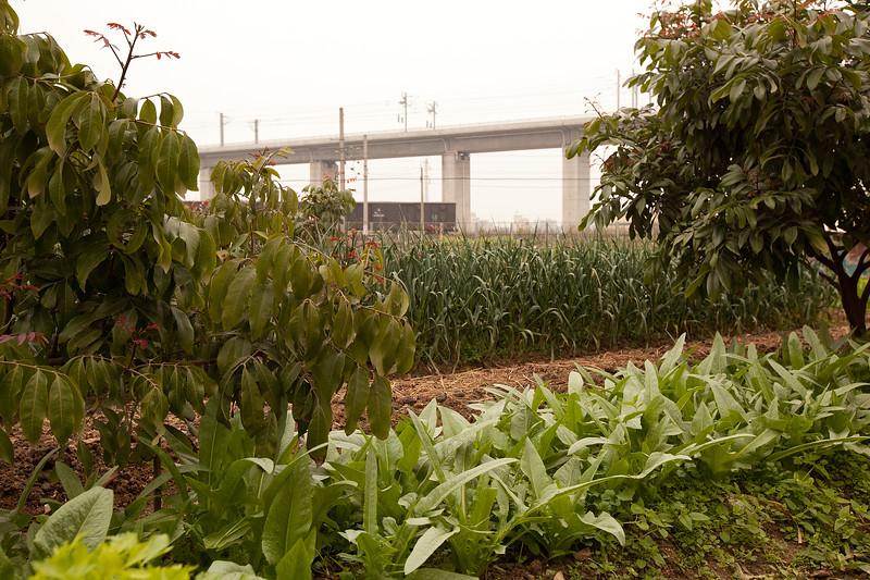 fc20110310guangzhou128104