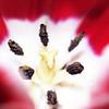 """First Place<br /> Advanced Nature<br /> Sam Jabour <br /> Westlake HS<br /> Austin, TX<br /> Instructor: Deanne Brown<br /> """"flower"""""""