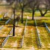 "Honorable Mention<br /> Advanced Landscape<br /> Graham Kirstein <br /> St. Mark's School of Texas<br /> Dallas, TX<br /> Instructor: Scott Hunt<br /> ""Graves"""
