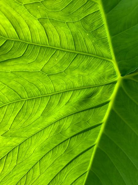 Natural Texture