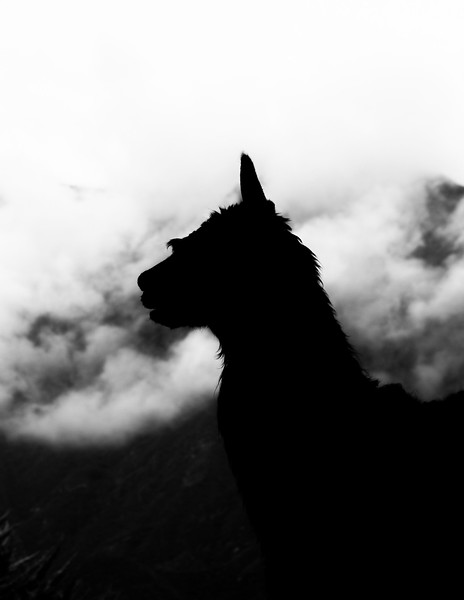 Andean Silhouette