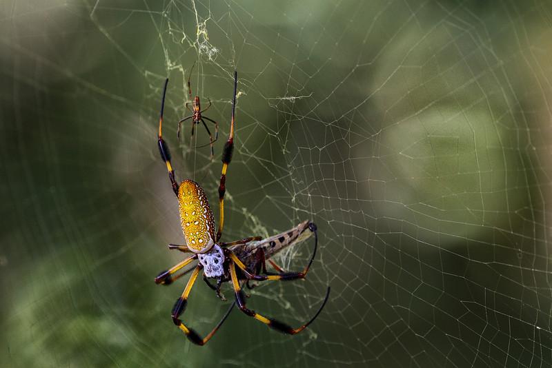 Spider Food Web