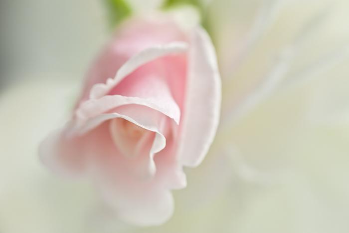 Rosebud pink, 21