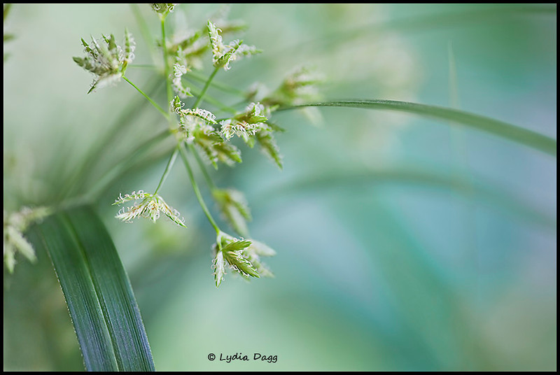 Simplicity - The Beauty of Flowering Grasses, 10