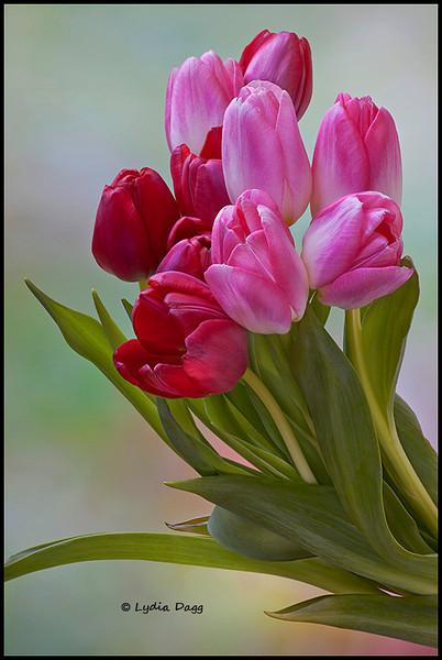 Spring is Winter's Reward, 1