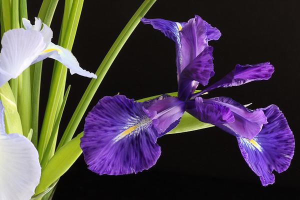 Iris Icons!