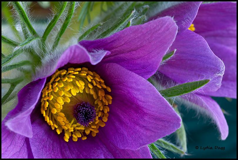 Joy of Spring - Carol's Garden #1