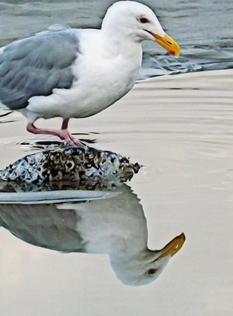 Reflections of a Seagull
