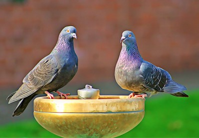 Pigeons and the Water Fountain  1