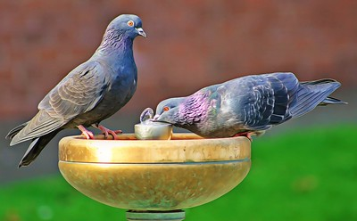 Pigeons and the Water Fountain 2