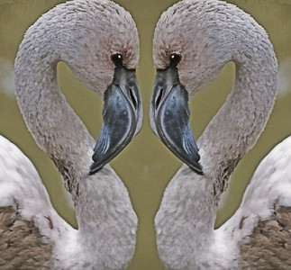 Flamingo Love 1