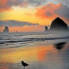 The Seagull and Haystack Rock
