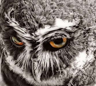 Spectacled Owl in Black and White