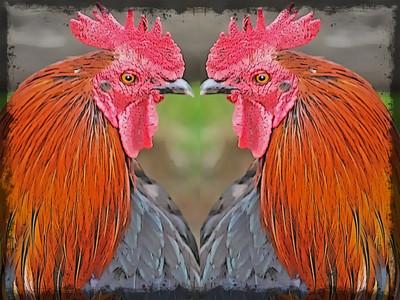Welsummer Twins