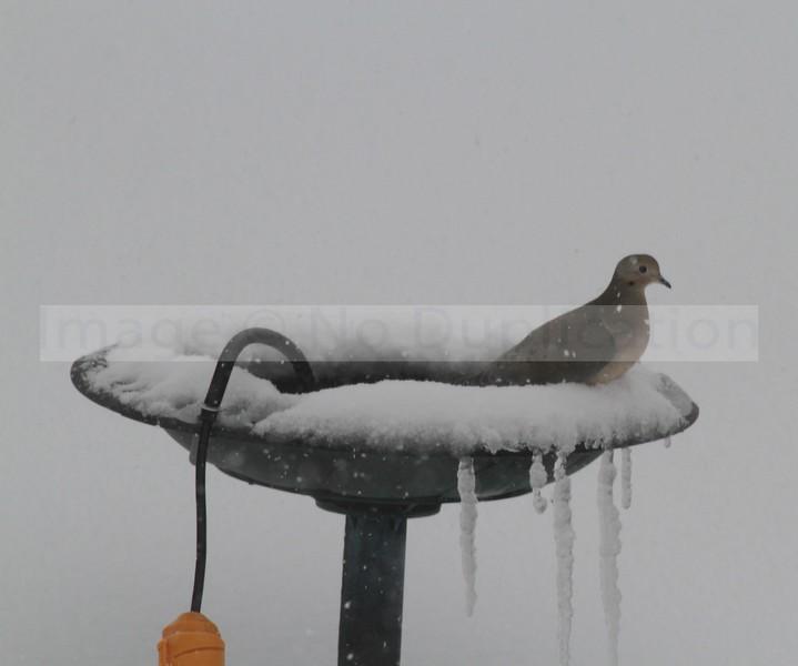 Bird Hot Tub