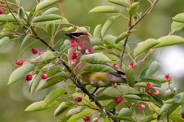 Paint Me Like an Audubon Bird