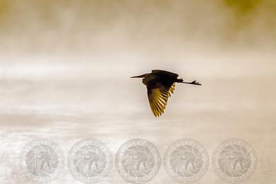 Egret Lake Hodges CA