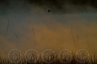 Foggy Flight Lake Hodges, CA