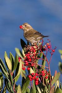 Sparrow Lake Jennings, CA