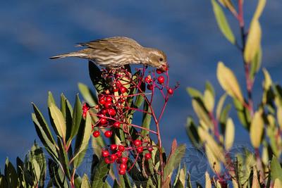 Sparrow Lake Jennings CA