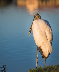 Lakeland - ancient wading bird