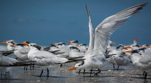 Terns on beach
