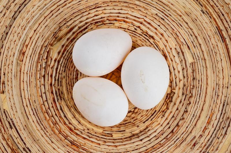 Lovebird Eggs