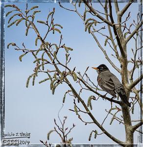 Birds - May 06, 2014