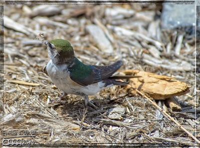 Birds May 21-24, 2014