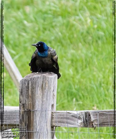 Birds May 7-11