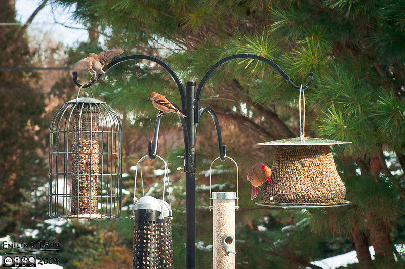 January 2004 . . . like most days, the feeders were packed.