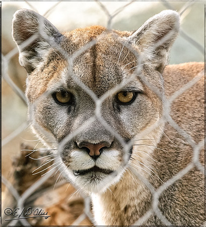 Cheyenne Mountain Zoo - 2010