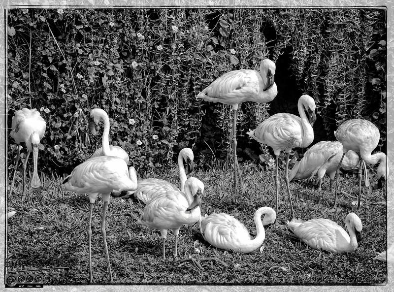 """<a href=""""http://en.wikipedia.org/wiki/Flamingo"""">http://en.wikipedia.org/wiki/Flamingo</a>"""