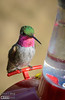 A series of shots of a Broad-Tailed hummingbird at one of my feeders.