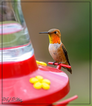 Jul2015 Hummers One