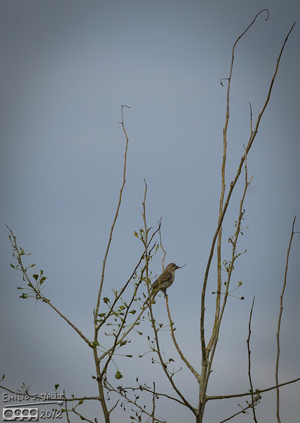 Another finch.