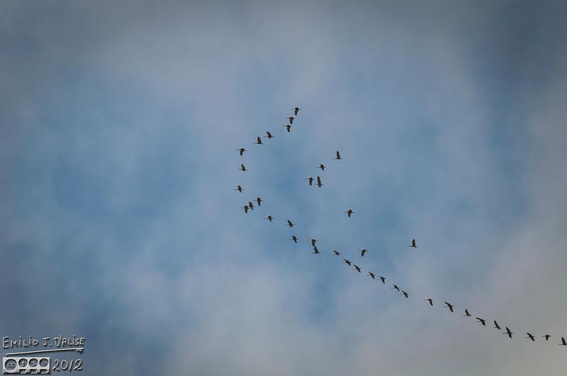 I wonder if cranes have politics?  Ranks?