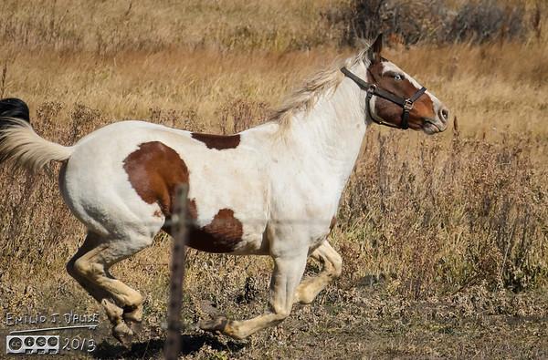 October Horses