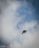 Clouds And Tree Swallows