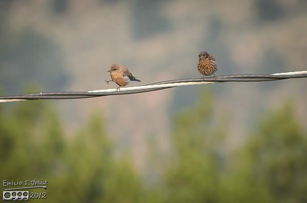 The Big Dump 2012 - The Birds